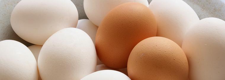 Белкон - яйца куриные оптом высшей категории по выгодным ценам!